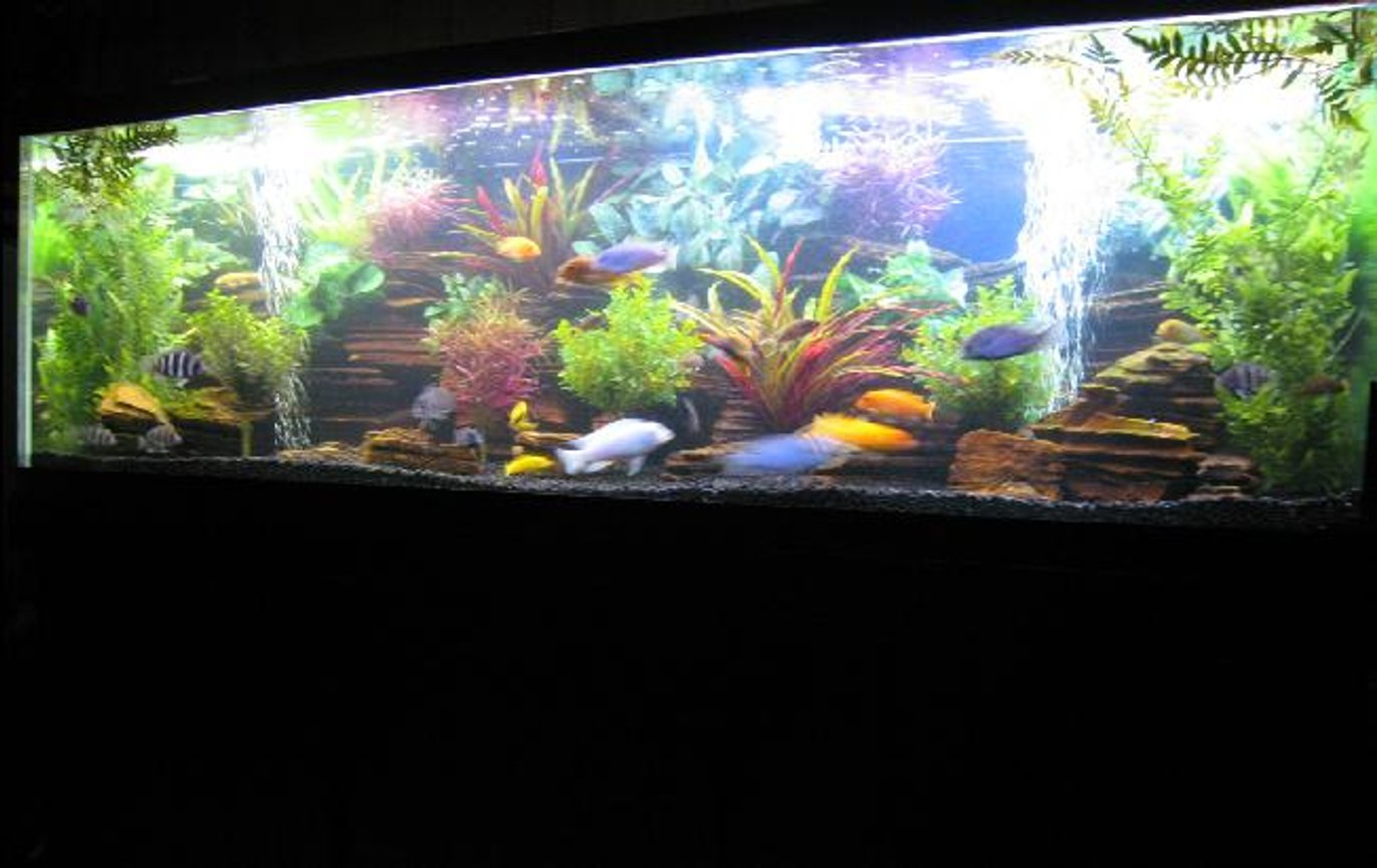 180 gallons freshwater fish tank (mostly fish and non-living decorations) - 180 Cichlid Tank 6x2x2