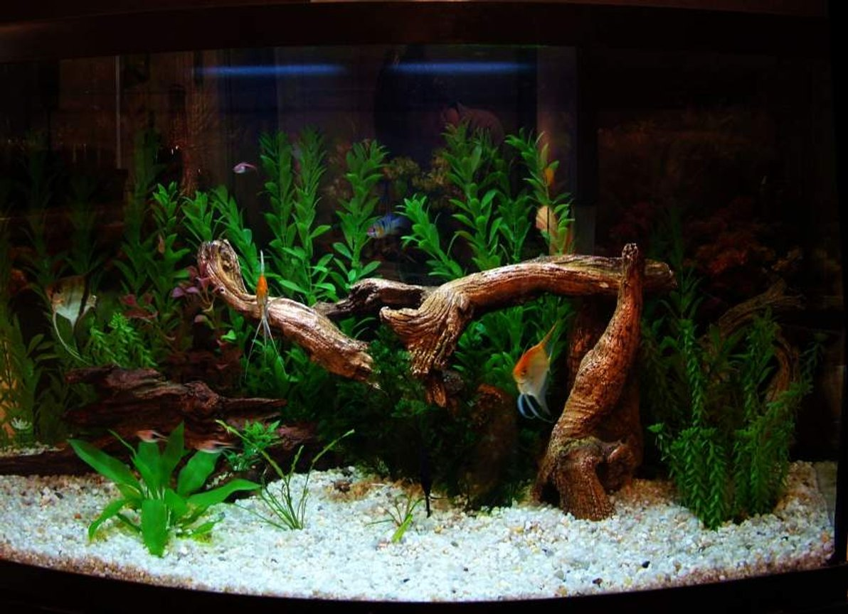 46 gallons freshwater fish tank (mostly fish and non-living decorations) - 46 Gallon Bowfront.
