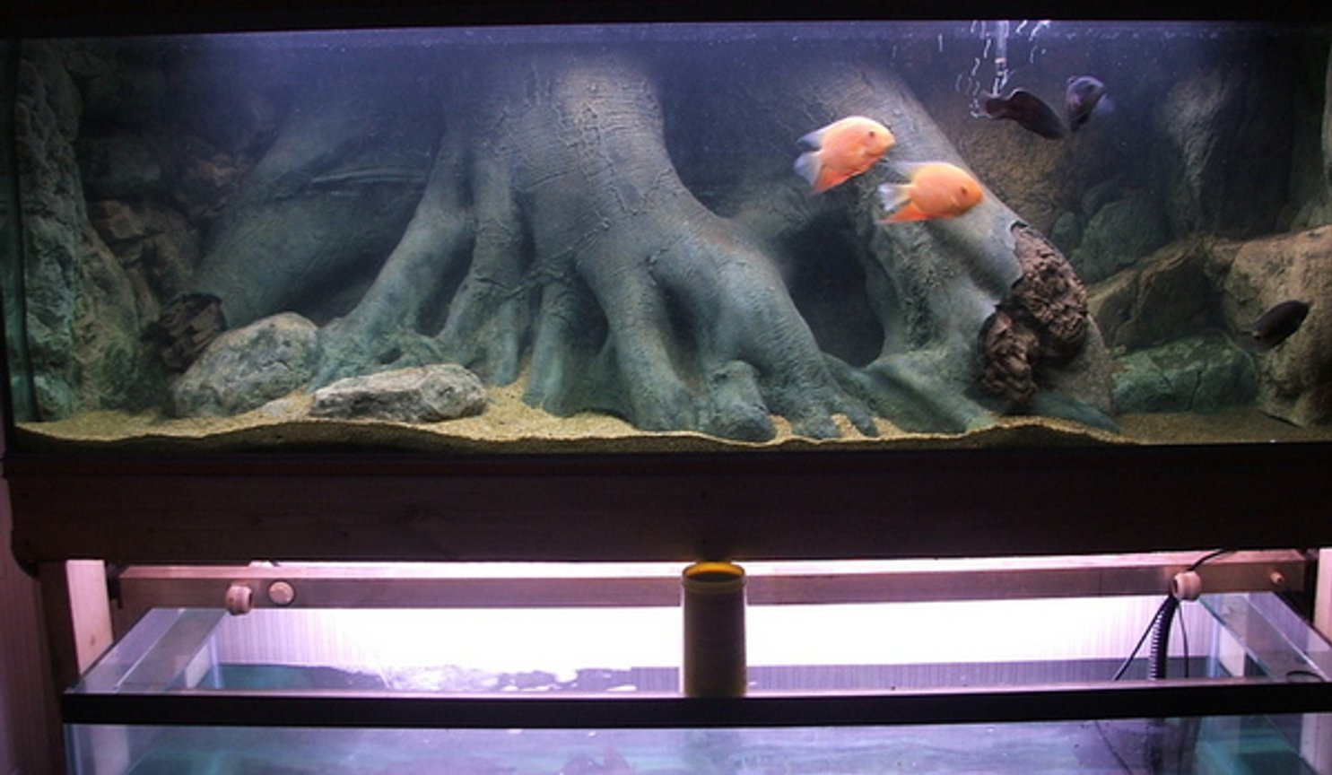 200 gallons freshwater fish tank (mostly fish and non-living decorations) - 7ft south american display tank.