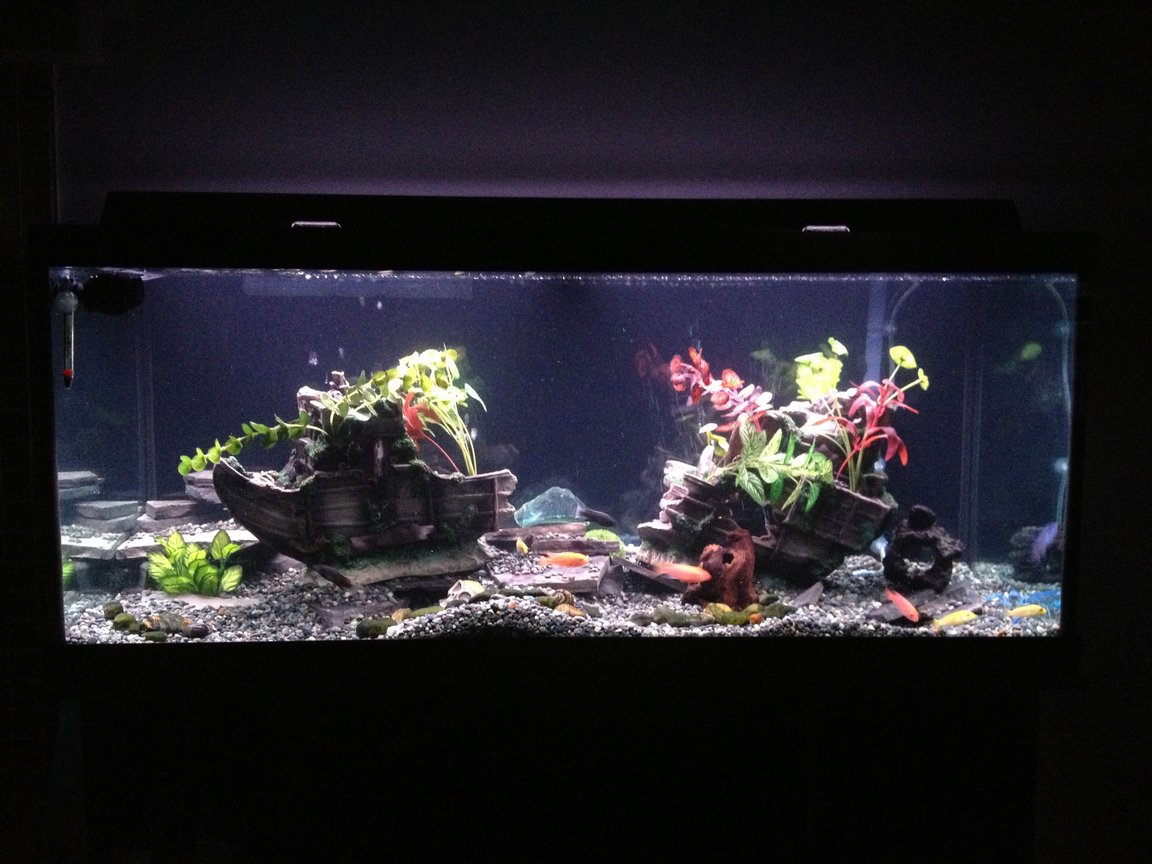 75 gallons freshwater fish tank (mostly fish and non-living decorations) - My first Cichlid tank.