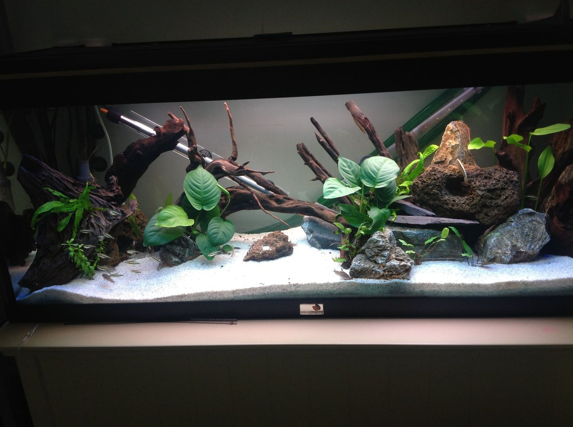 65 gallons freshwater fish tank (mostly fish and non-living decorations) - Amazon stocked 250 litre