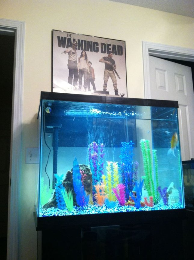 56 gallons freshwater fish tank (mostly fish and non-living decorations) - 56 gallon freshwater tank