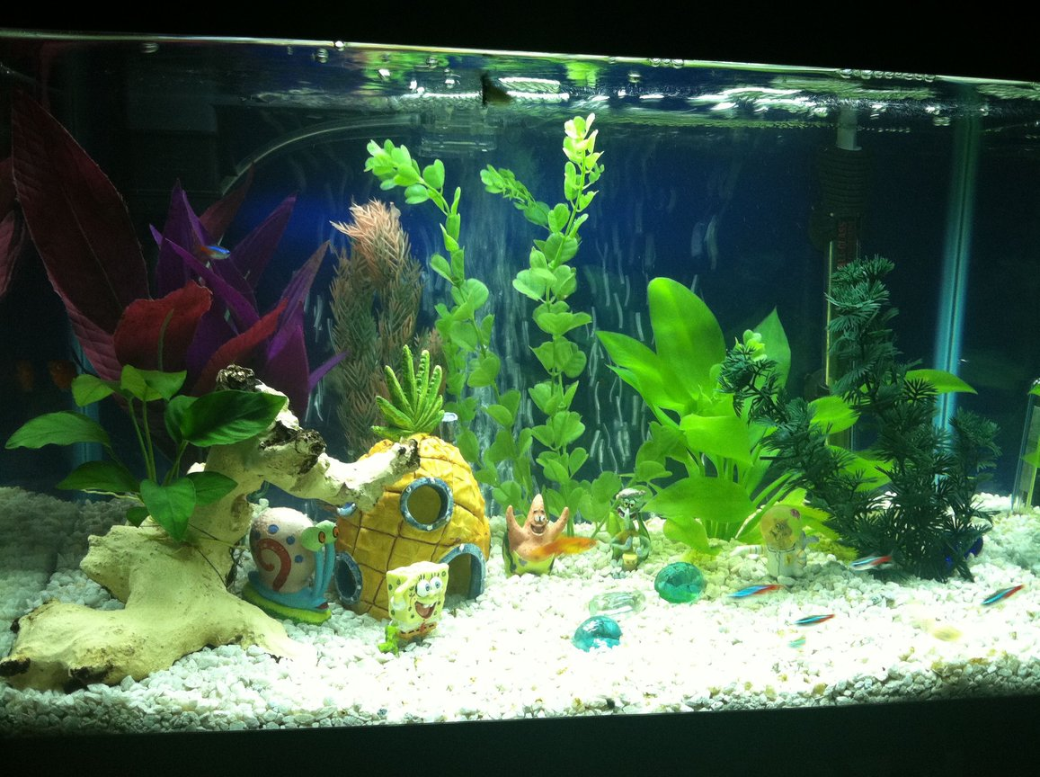 10 gallons freshwater fish tank (mostly fish and non-living decorations) - 10 gallon. 1 Anubiuas Nana 5 Assorted Fake Plants 1 Fake Driftwood Assorted Decorations ----------------------- 2 Platy (Sunburst and Red Wag) 1 Male Guppy 2 Albino Cory Catfish 6 Neon Tetras
