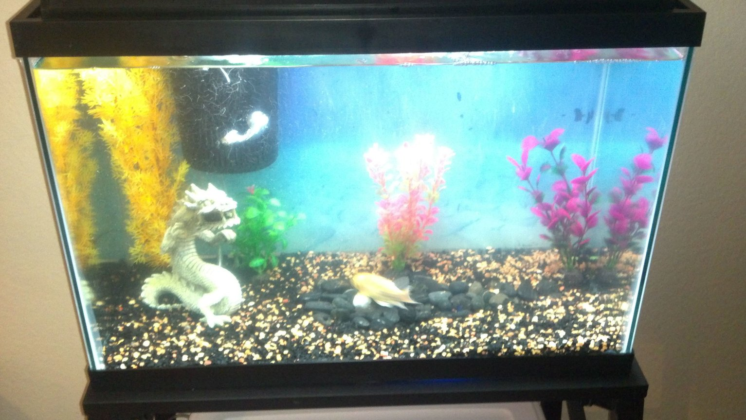 20 gallons freshwater fish tank (mostly fish and non-living decorations) - My week ld brand new wal-mart special.