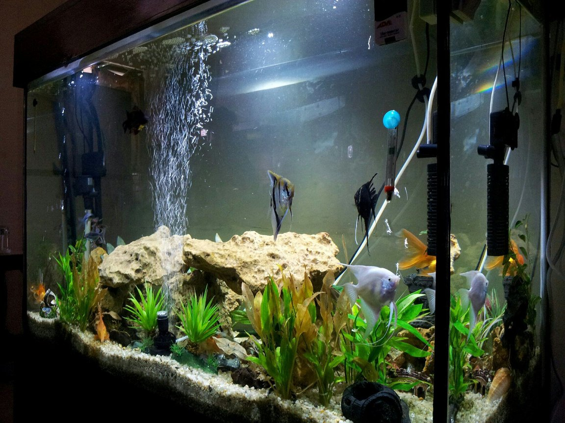 115 gallons freshwater fish tank (mostly fish and non-living decorations) - My tank
