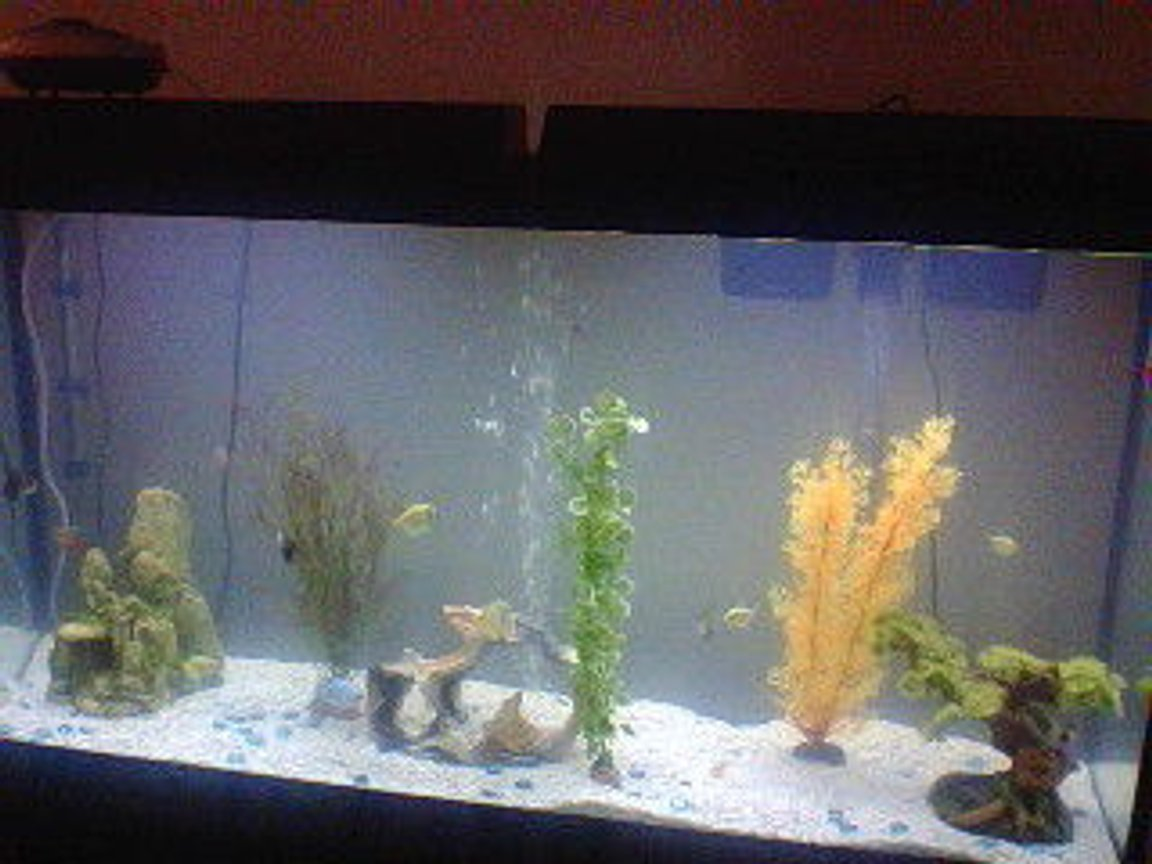 60 gallons freshwater fish tank (mostly fish and non-living decorations) - My fish tank!
