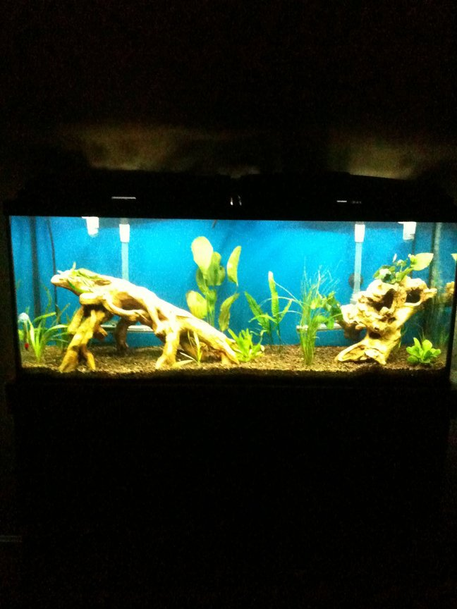 55 gallons freshwater fish tank (mostly fish and non-living decorations) - 55 Gallon Fresh