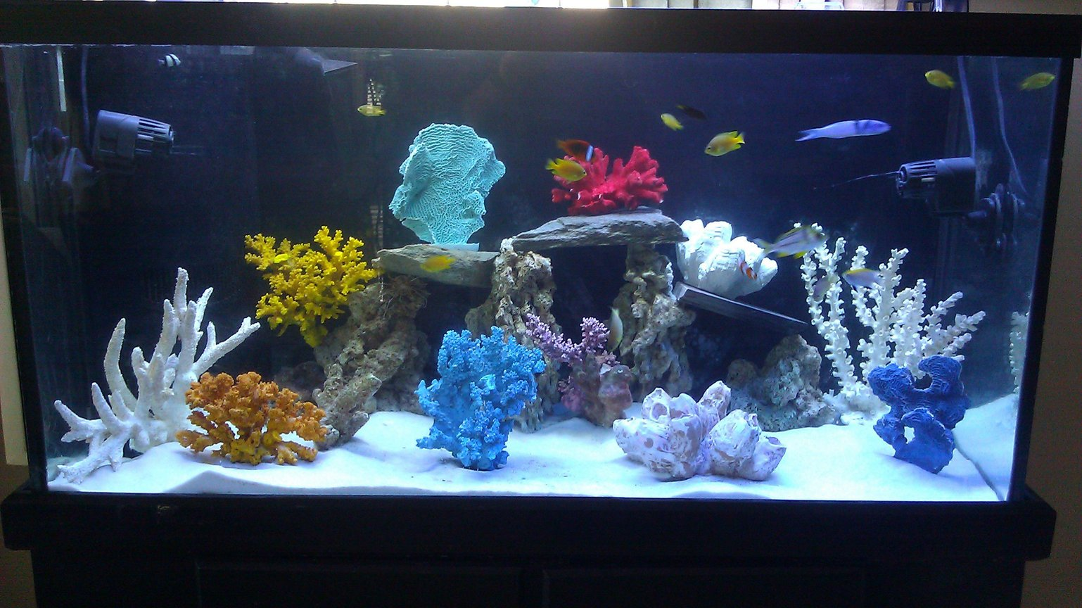 90 gallons freshwater fish tank (mostly fish and non-living decorations) - 90 gallon tank fish only