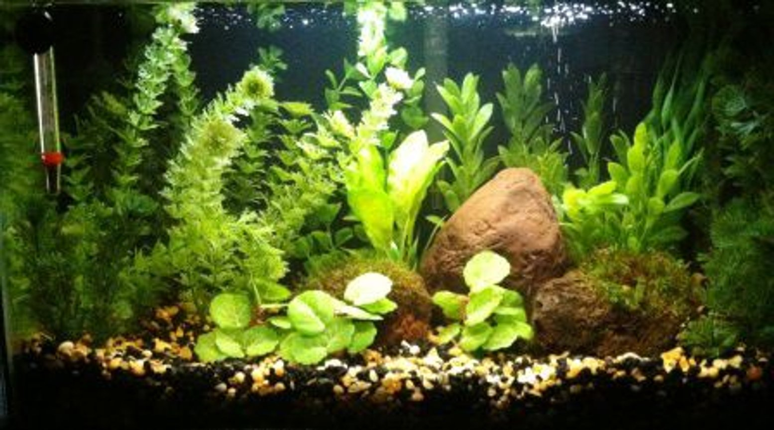 10 gallons freshwater fish tank (mostly fish and non-living decorations) - 10 Gallon