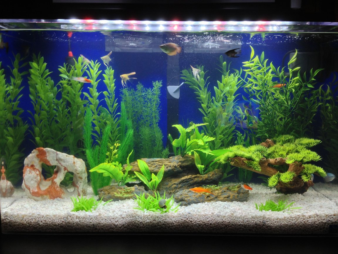 29 gallons freshwater fish tank (mostly fish and non-living decorations) - Seaclear 29 gallon fresh water tank
