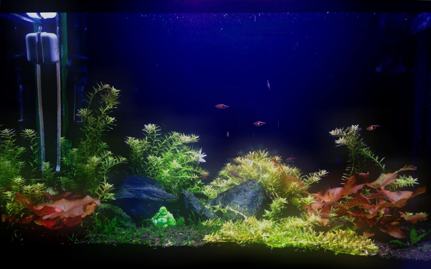 29 gallons freshwater fish tank (mostly fish and non-living decorations) - 29g planted tank
