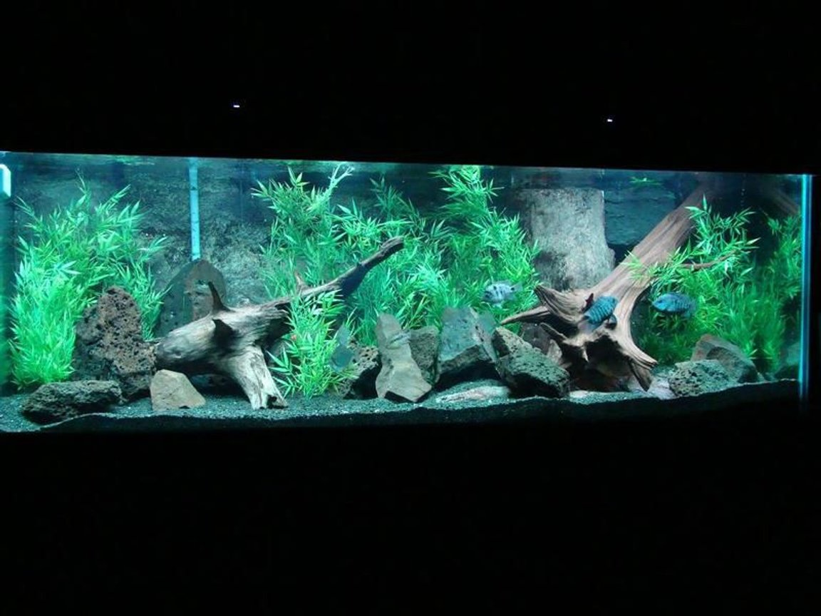 200 gallons freshwater fish tank (mostly fish and non-living decorations) - 200 Gallon Boyu tank African Cichlid