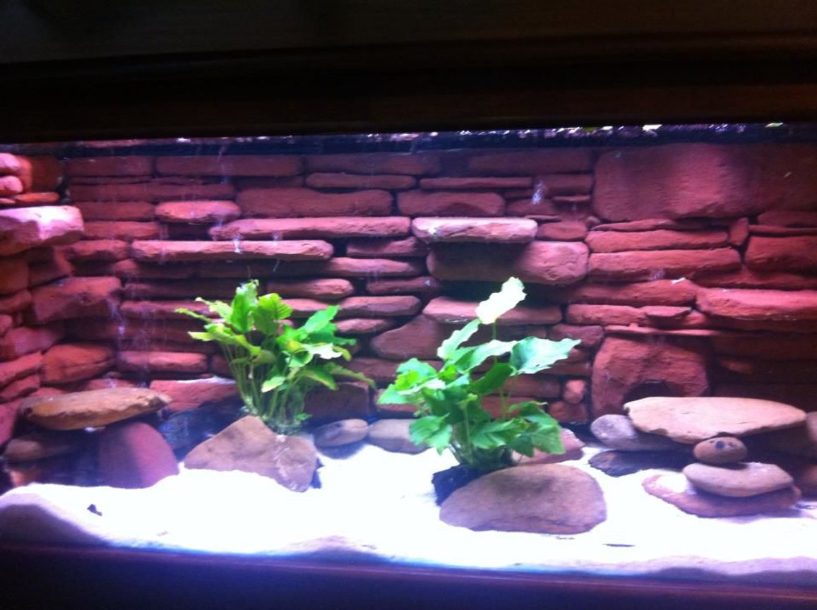 120 gallons freshwater fish tank (mostly fish and non-living decorations) - Jack Dempsey tank