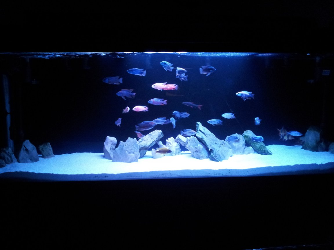 100 gallons freshwater fish tank (mostly fish and non-living decorations)