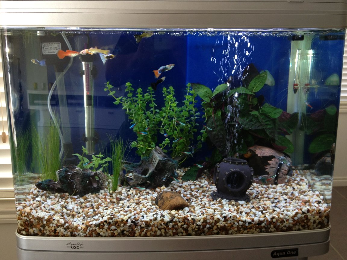 24 gallons freshwater fish tank (mostly fish and non-living decorations) - Fish Tank