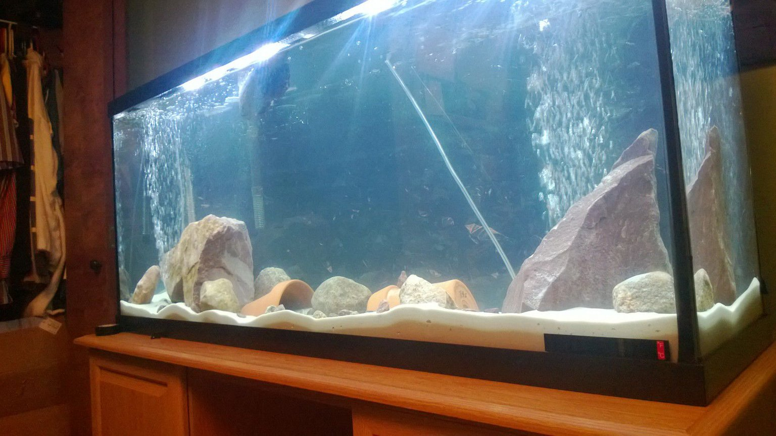 55 gallons freshwater fish tank (mostly fish and non-living decorations) - 55 gallon fresh water tank...