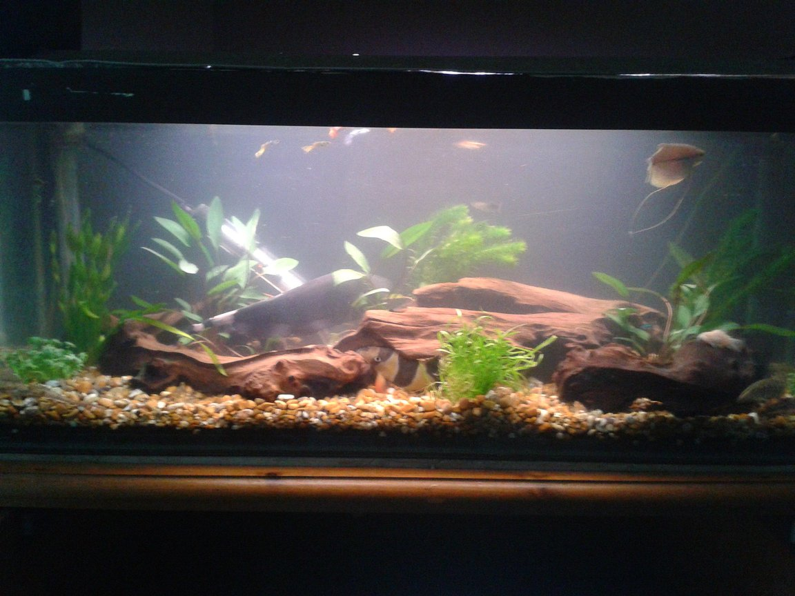 10 gallons freshwater fish tank (mostly fish and non-living decorations) - my middle tank of three. going to try aquascaping my big tank so taking my time to make it as natural as possible.