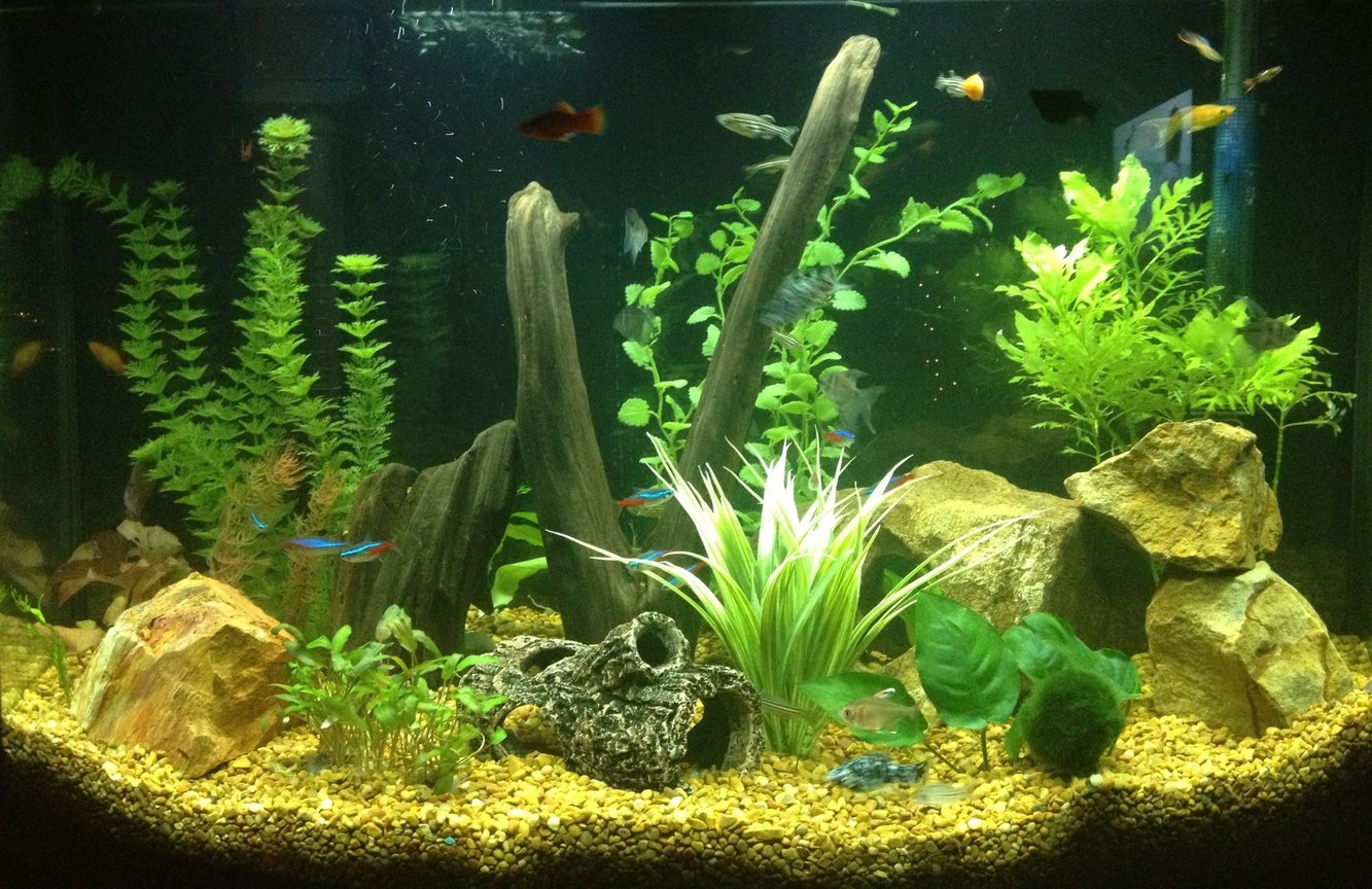 36 gallons freshwater fish tank (mostly fish and non-living decorations) - Newly established 36 gallon freshwater tank filled with activity and LOTS of color!!!