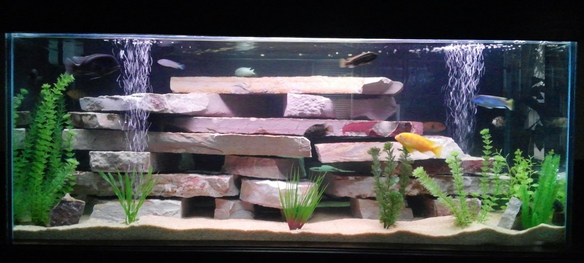 75 gallons freshwater fish tank (mostly fish and non-living decorations) - 75 gal mbuna tank