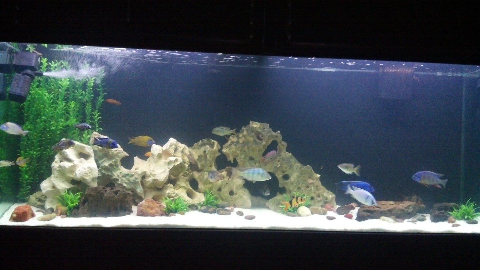 270 gallons freshwater fish tank (mostly fish and non-living decorations) - 270 cichlid tank