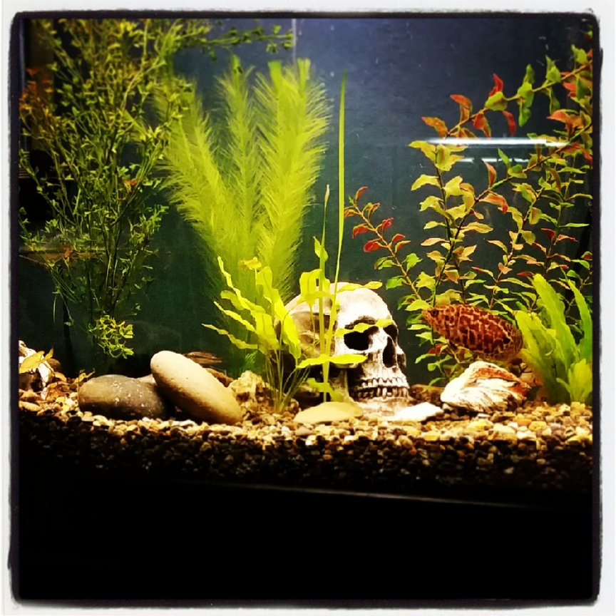 85 gallons freshwater fish tank (mostly fish and non-living decorations) - 85 gallons