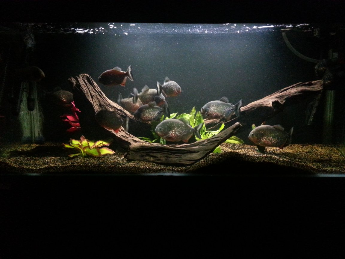 160 gallons freshwater fish tank (mostly fish and non-living decorations) - My main tank