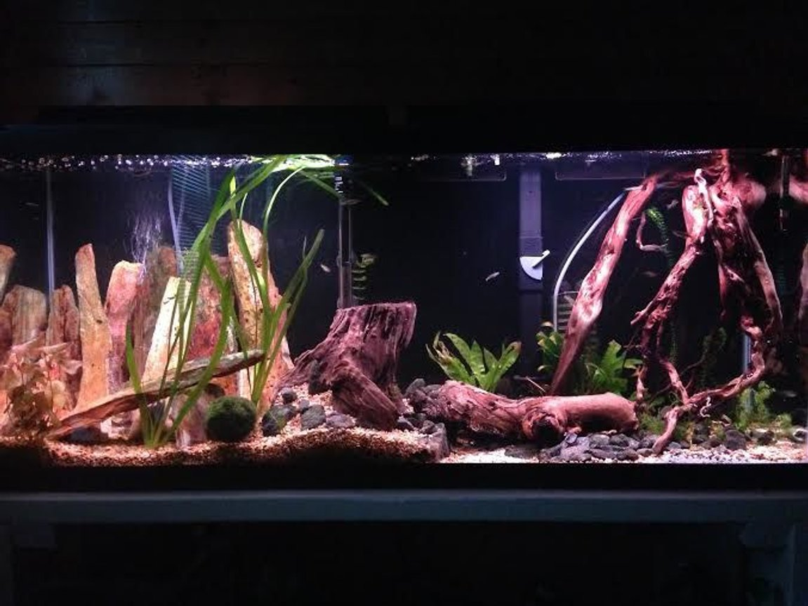 55 gallons freshwater fish tank (mostly fish and non-living decorations) - This is my aquarium. Almost all the decoration I found traveling.