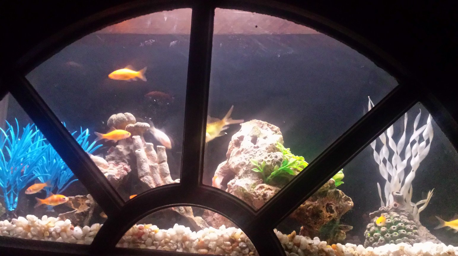 4 gallons freshwater fish tank (mostly fish and non-living decorations) - current