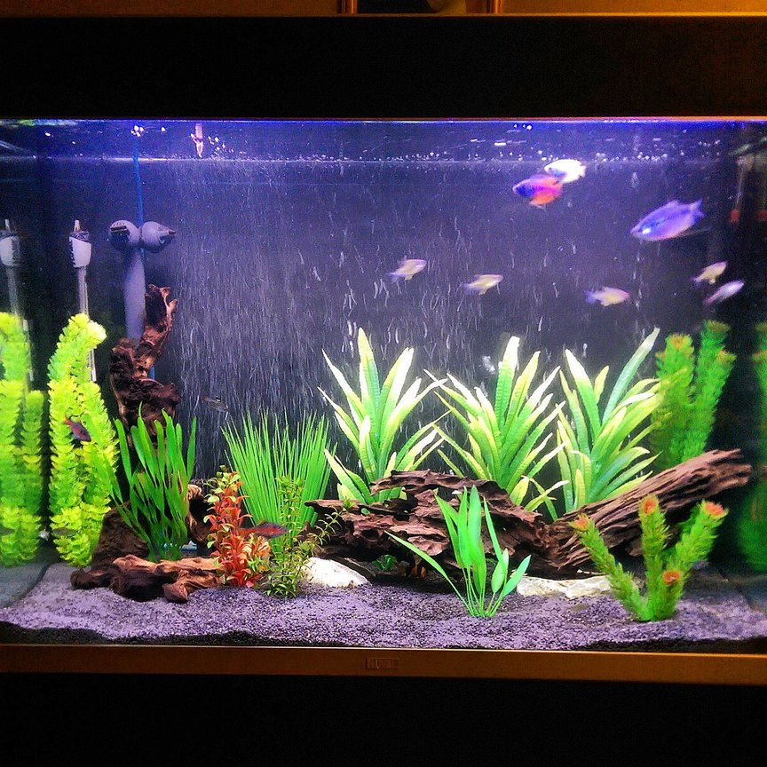 75 gallons freshwater fish tank (mostly fish and non-living decorations) - Working progress