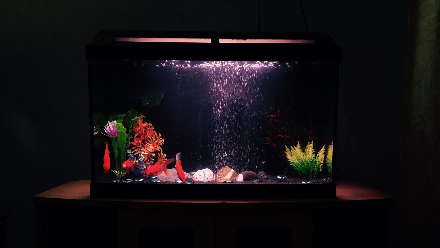 70 gallons freshwater fish tank (mostly fish and non-living decorations) - Fresh water goldfish tank