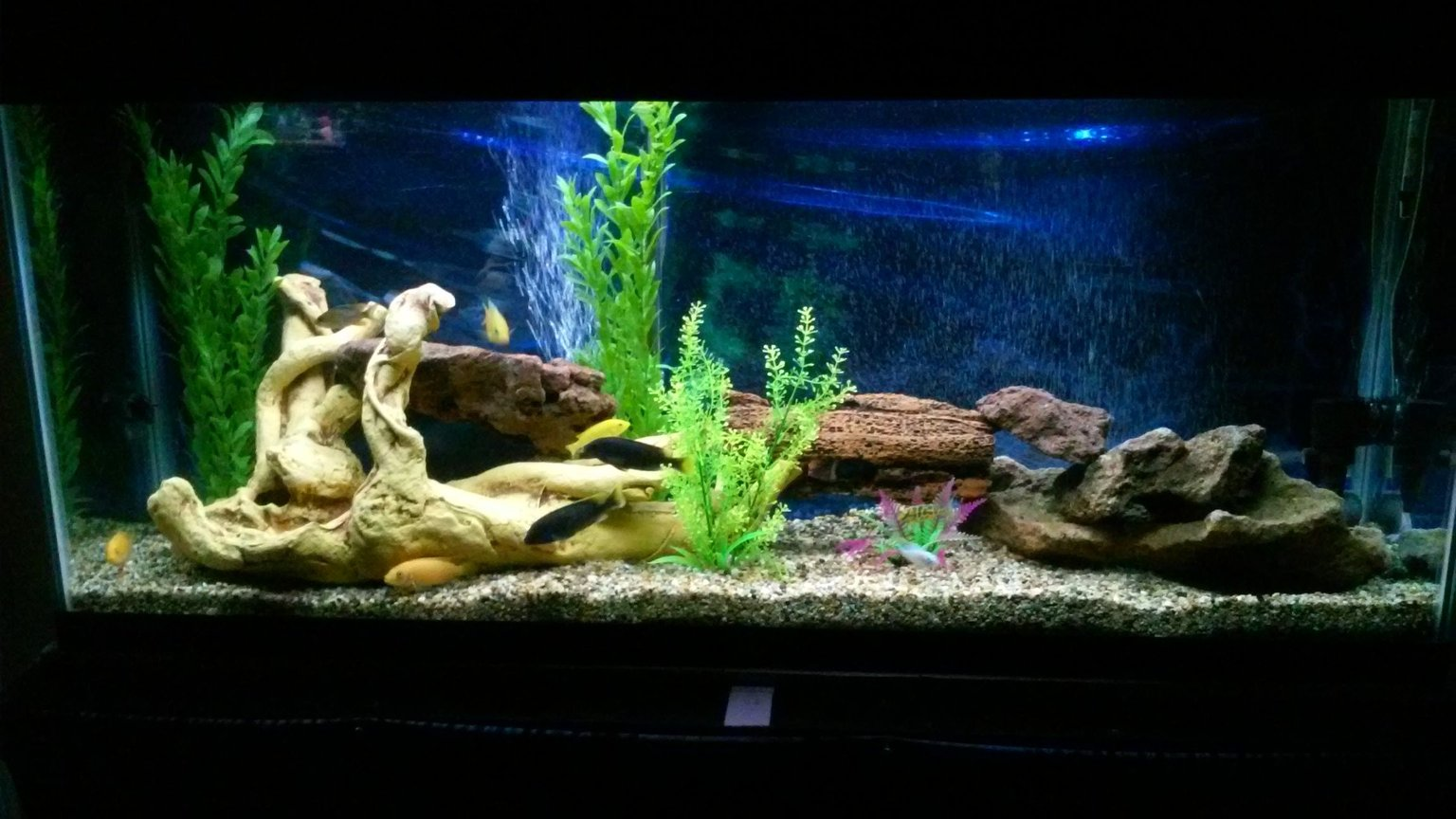 55 gallons freshwater fish tank (mostly fish and non-living decorations) - Back in action...