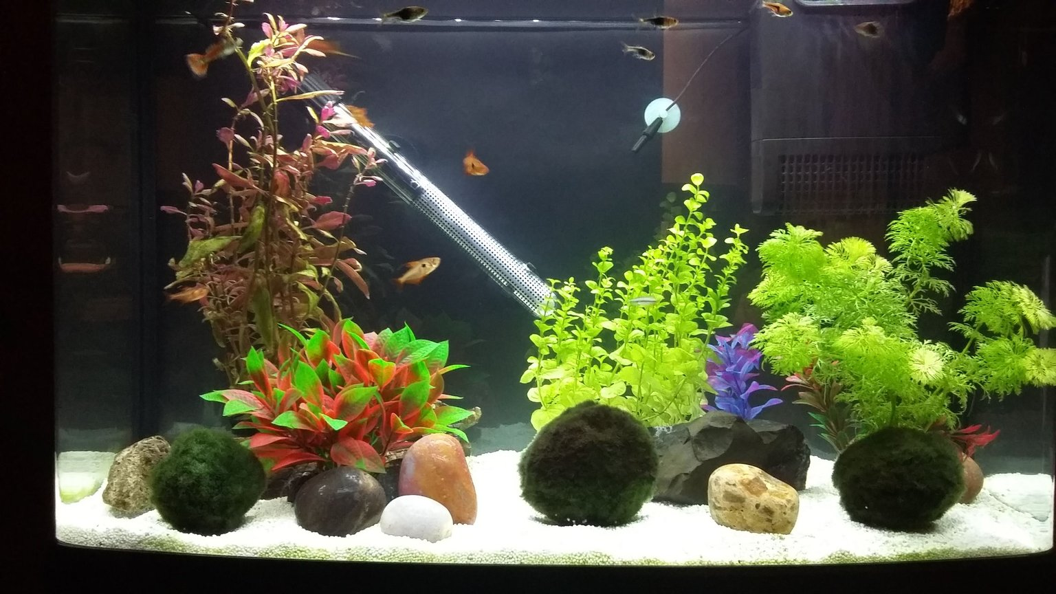 16 gallons freshwater fish tank (mostly fish and non-living decorations) - One plastic plant and weighted and potted plants and moss balls. A relatively peaceful community tank with one feisty guppy and a dive bombing red phantom.