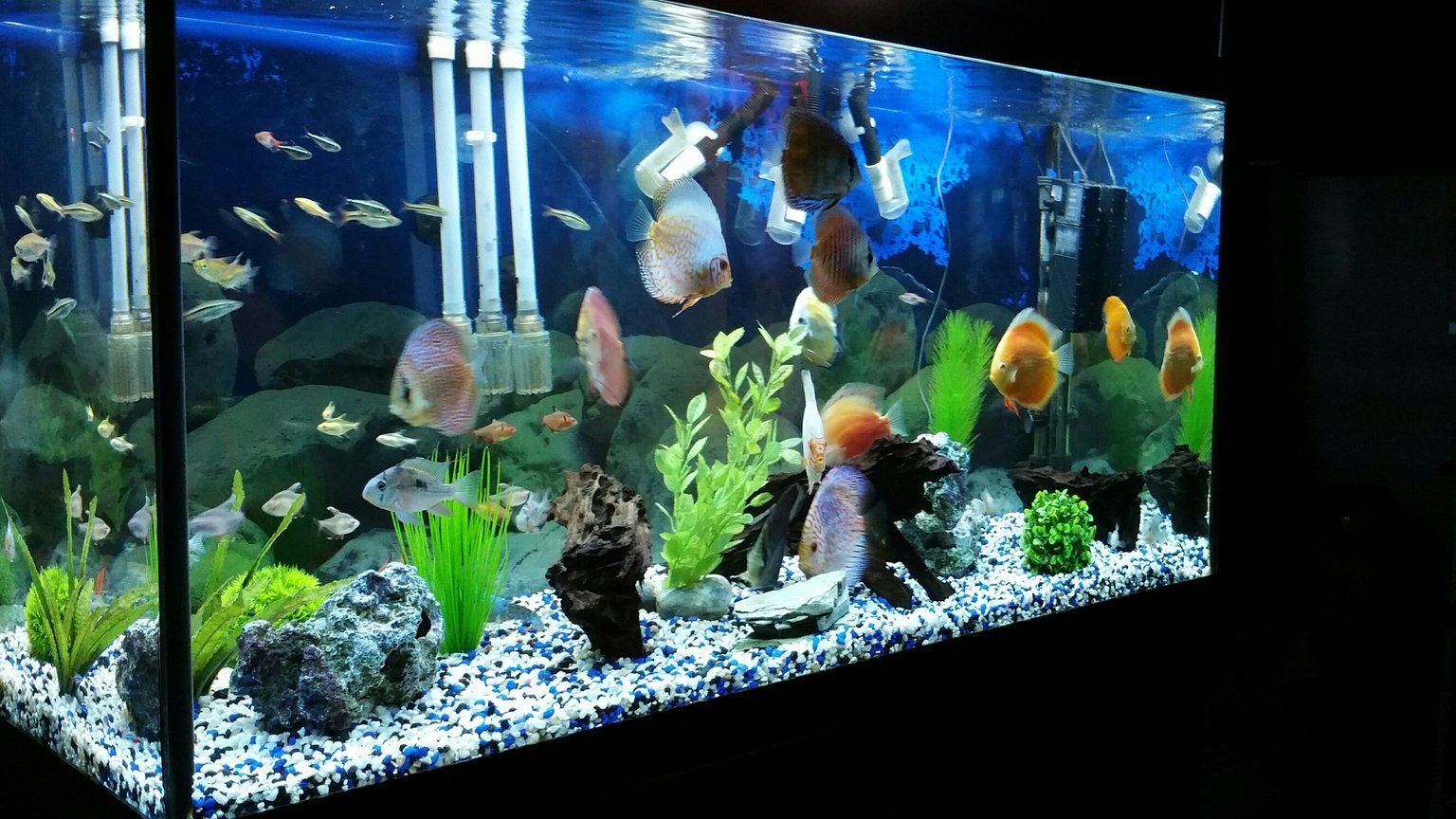 90 gallons freshwater fish tank (mostly fish and non-living decorations) - discus tank...