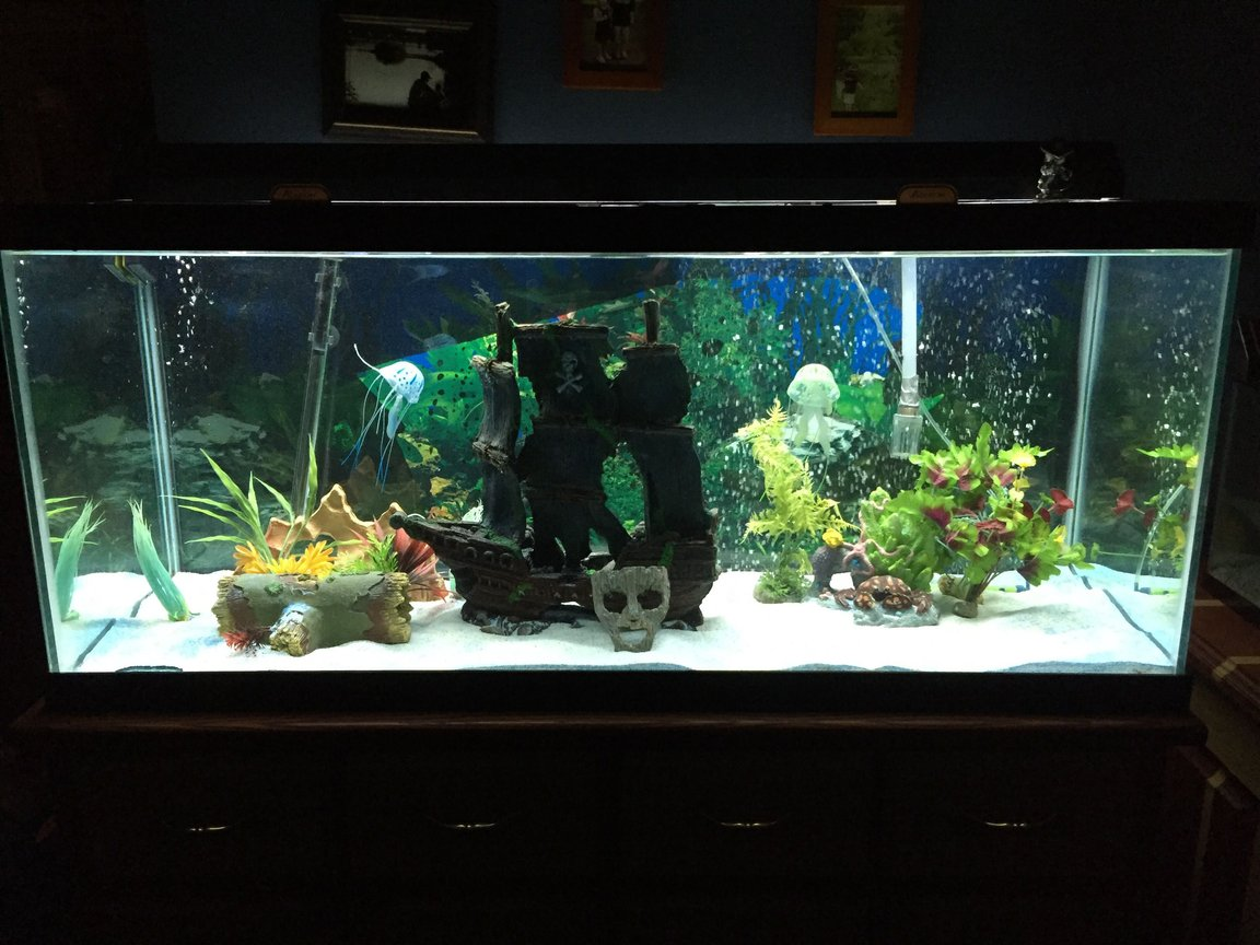 75 gallons freshwater fish tank (mostly fish and non-living decorations) - My 75 gallon fish tank.