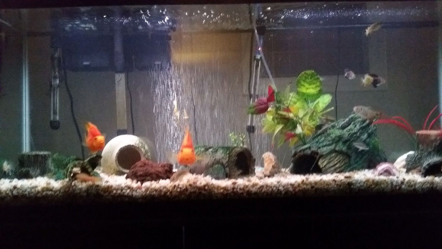 55 gallons freshwater fish tank (mostly fish and non-living decorations) - Freshwater 55 gallon