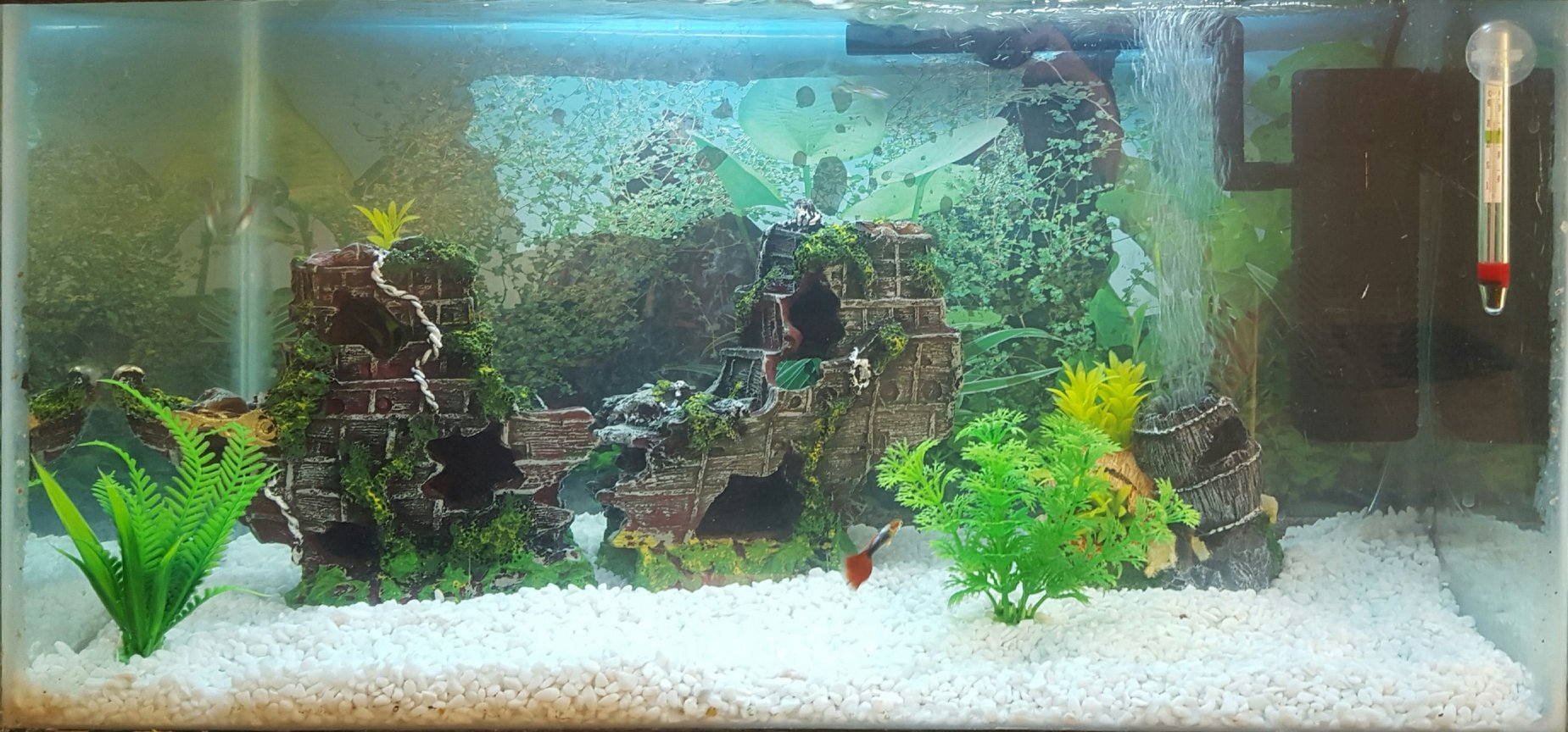 15 gallons freshwater fish tank (mostly fish and non-living decorations) - New tank
