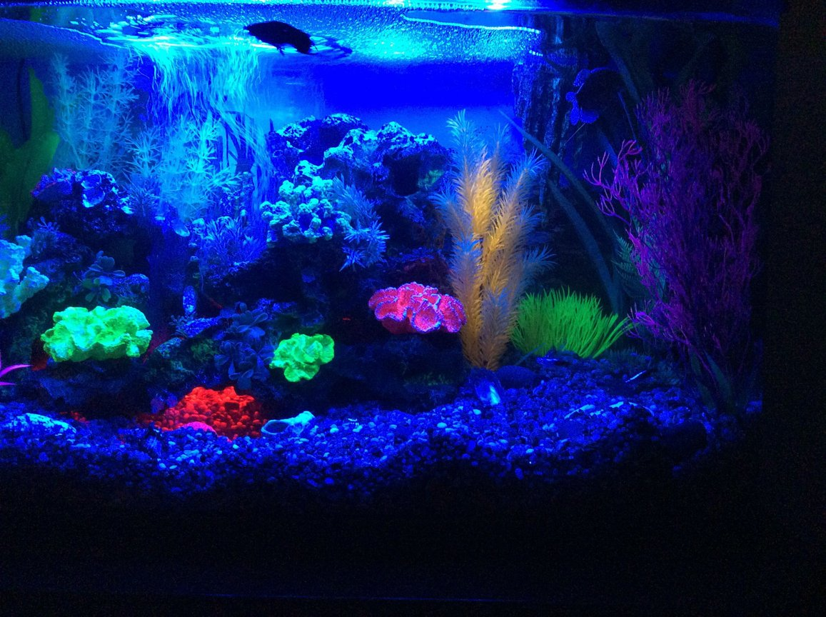 23 gallons freshwater fish tank (mostly fish and non-living decorations) - Blue led