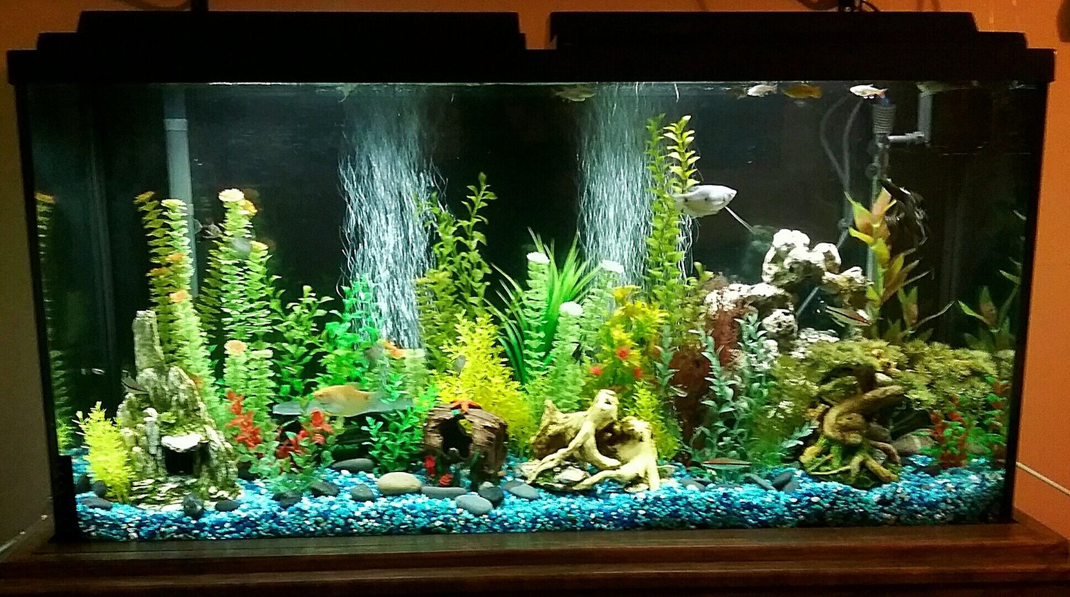 65 gallons freshwater fish tank (mostly fish and non-living decorations) - 65 gallon freshwater tank with various community fish and fake plants.