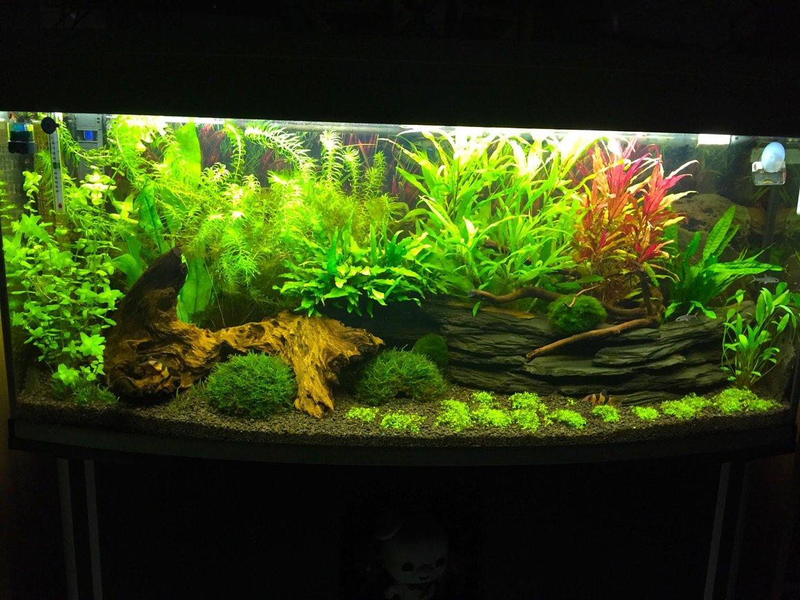 240 gallons freshwater fish tank (mostly fish and non-living decorations) - My 240l bow front tank 4 months old