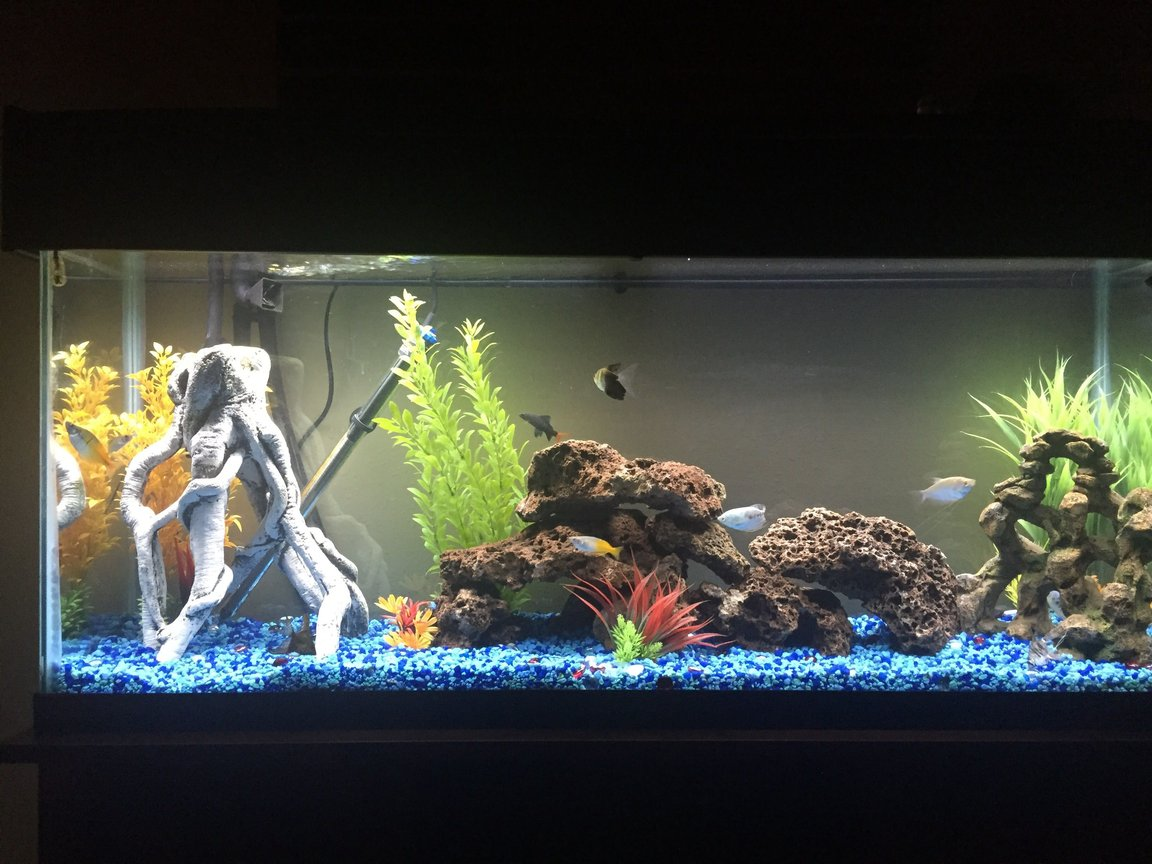 65 gallons freshwater fish tank (mostly fish and non-living decorations) - So far