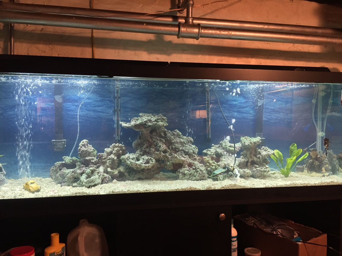 125 gallons freshwater fish tank (mostly fish and non-living decorations) - Freshwater one angel fish , gourami,
