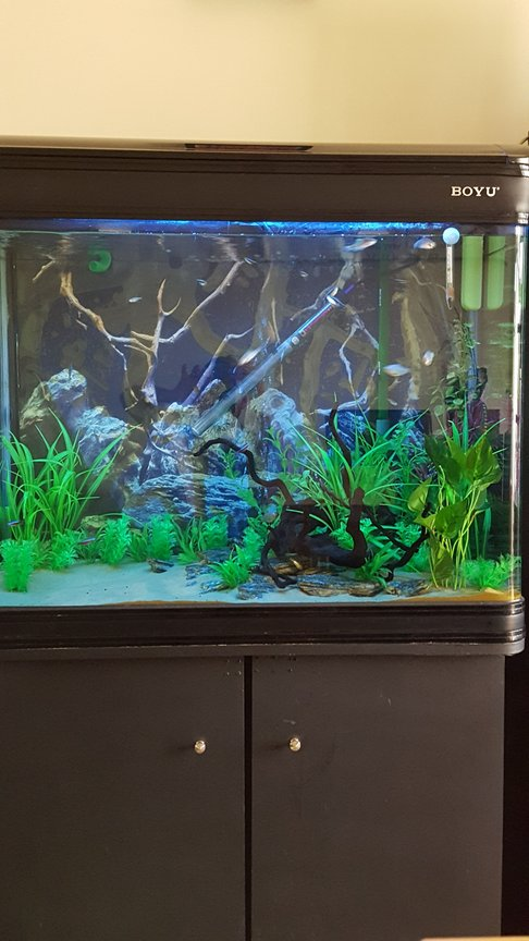 50 gallons freshwater fish tank (mostly fish and non-living decorations) - 200l tank