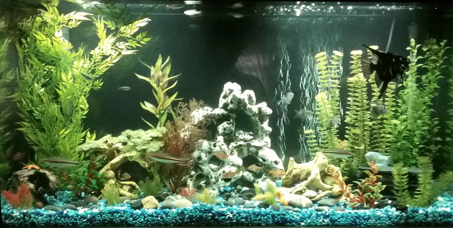 65 gallons freshwater fish tank (mostly fish and non-living decorations) - 60 gallon freshwater tank with fake plants. 5 bloodthin tetras 4 black neon tetras 1 angel fish 3 platys 5 Cory cats 3 Dennison Barb's 3 cherry Barb's 2 algae eaters 4 black skirt tetras 6 red minor tetras 4 gouramis