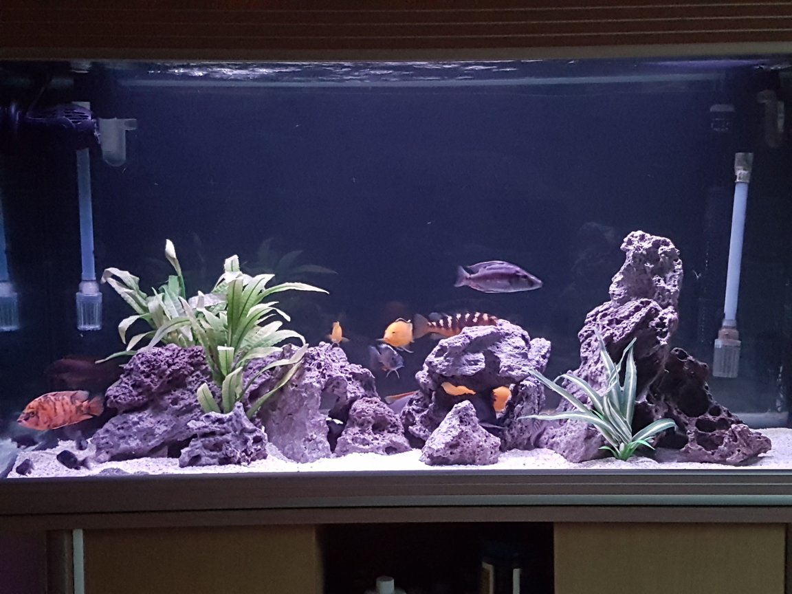 90 gallons freshwater fish tank (mostly fish and non-living decorations) - 300 ltr African cichlid aquarium