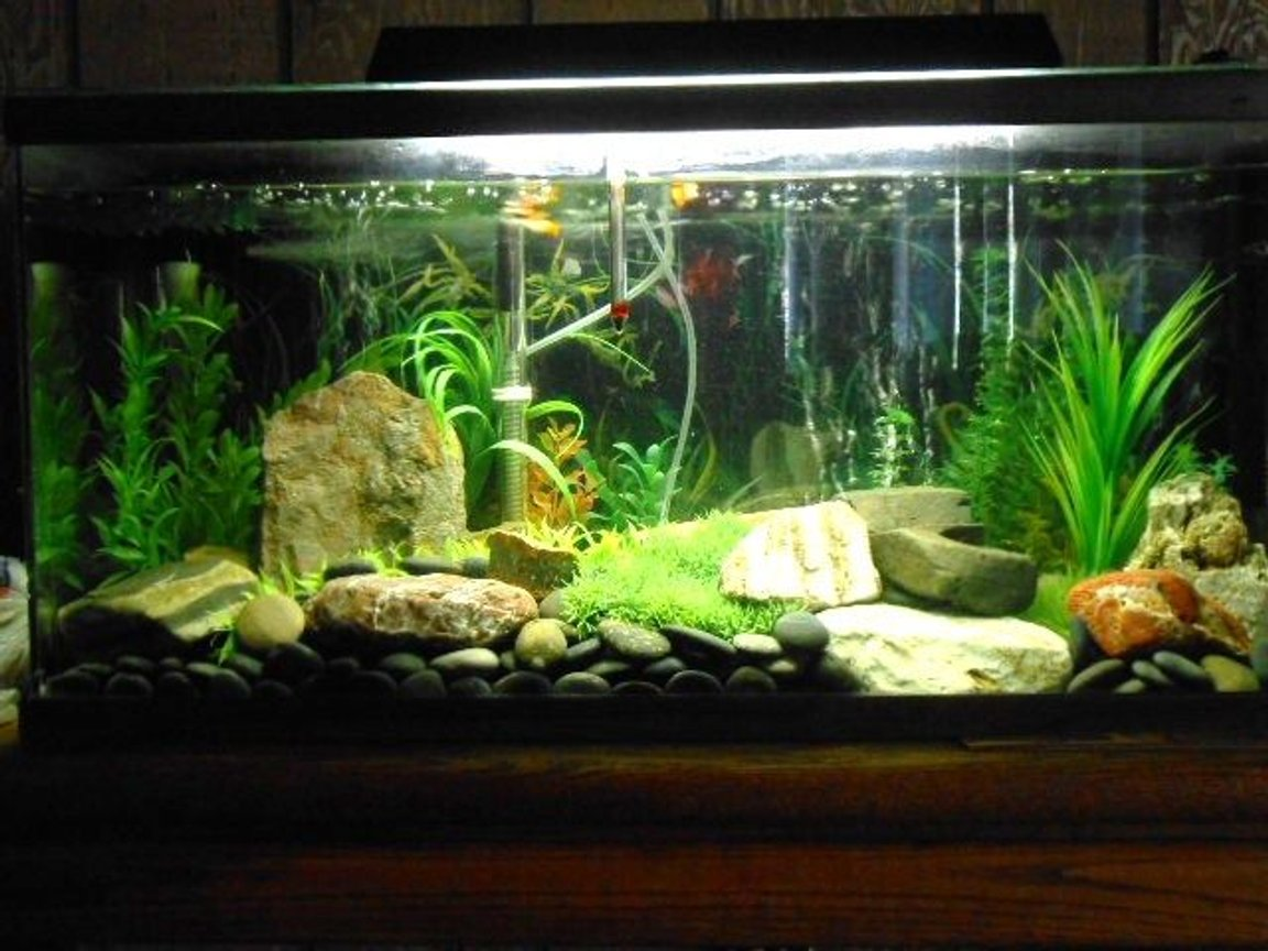 50 gallons freshwater fish tank (mostly fish and non-living decorations) - 50 gal. Freshwater tank.