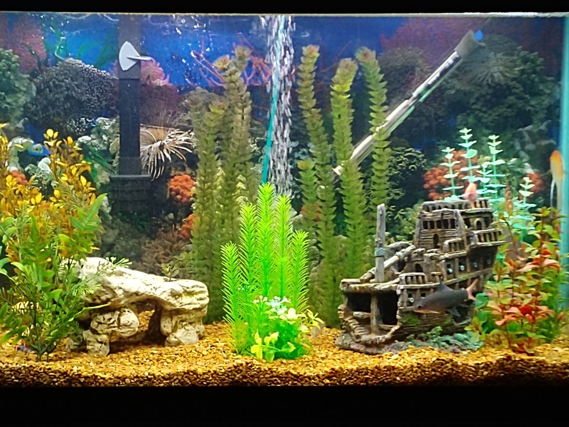 65 gallons freshwater fish tank (mostly fish and non-living decorations) - Taylor Ocean
