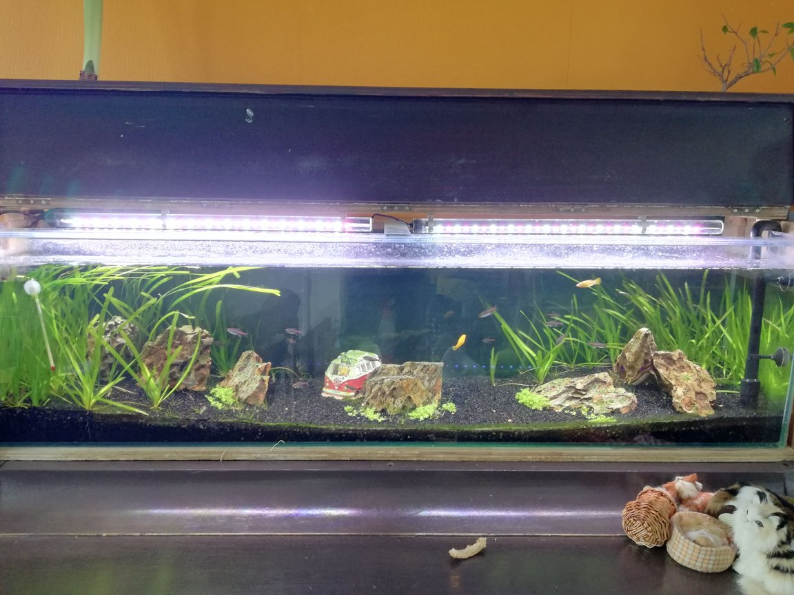 45 gallons freshwater fish tank (mostly fish and non-living decorations) - Normally i have an casing around the aquarium because i made it inside a piano. However, for your view i removed it.