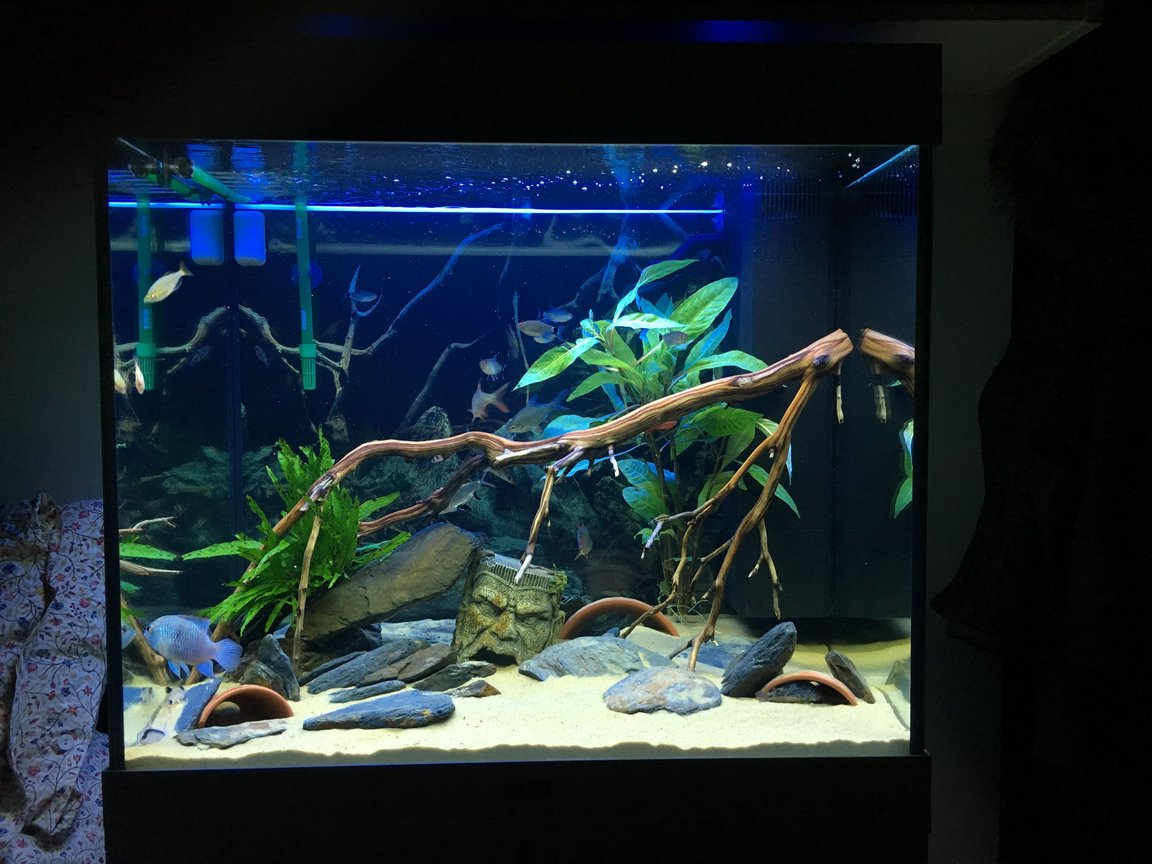 200 gallons freshwater fish tank (mostly fish and non-living decorations) - Current Update