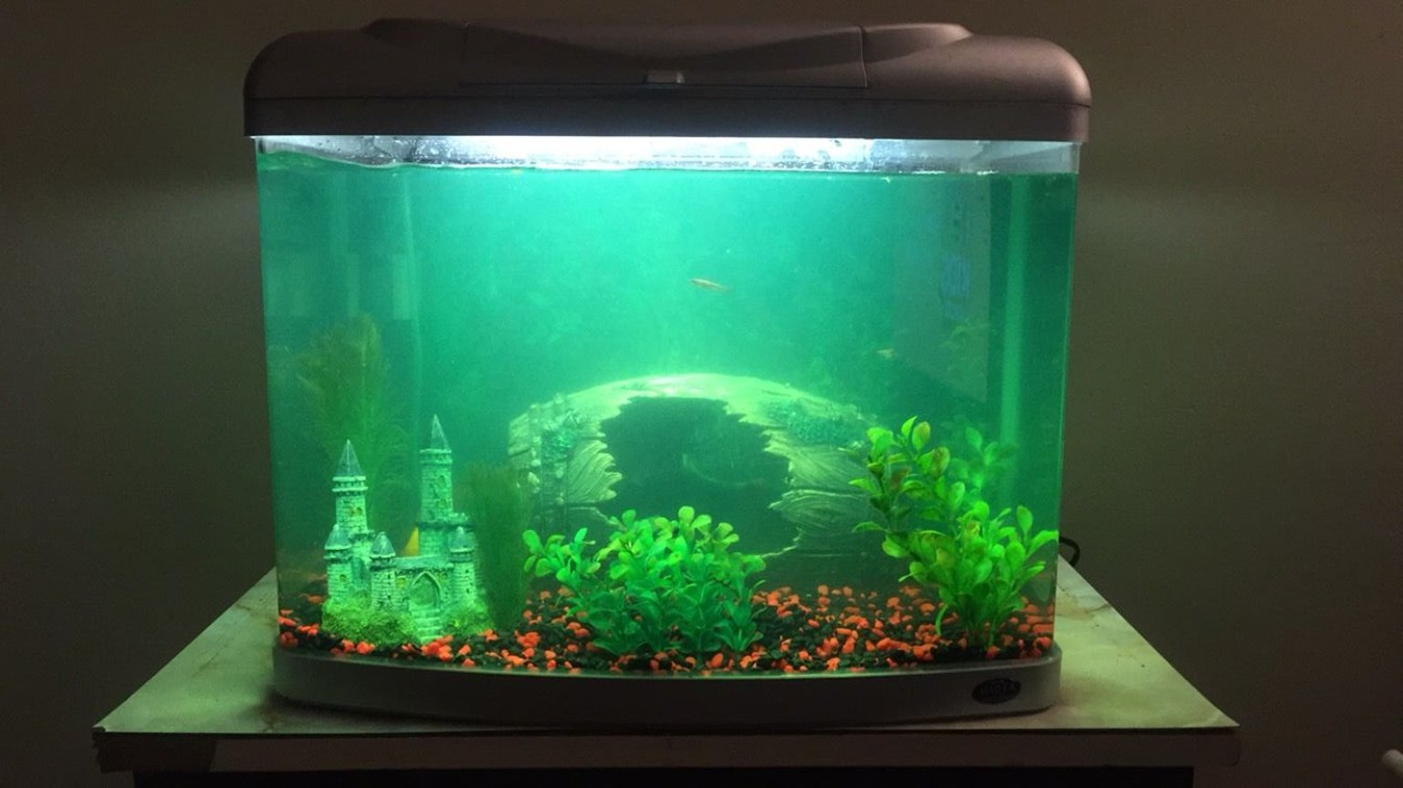 20 gallons freshwater fish tank (mostly fish and non-living decorations) - This is the latest aquarium setup. My progress is slow but I'm enjoying the hobby