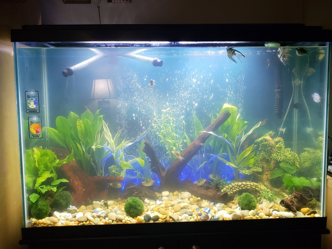 16 gallons freshwater fish tank (mostly fish and non-living decorations) - Freshwater